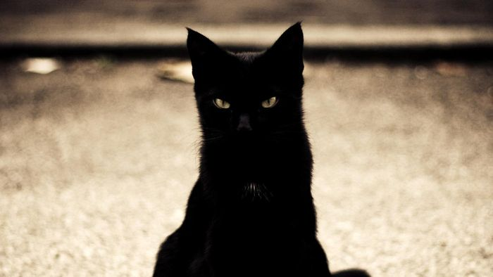What Are Examples of Superstition?