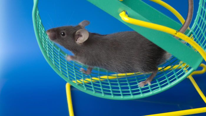 How Fast Can a Mouse Run?
