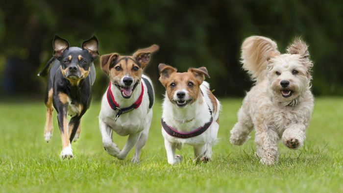 What Is the Fastest Dog in the World?