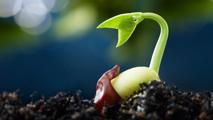 What Are the Five Stages of Seed Germination?