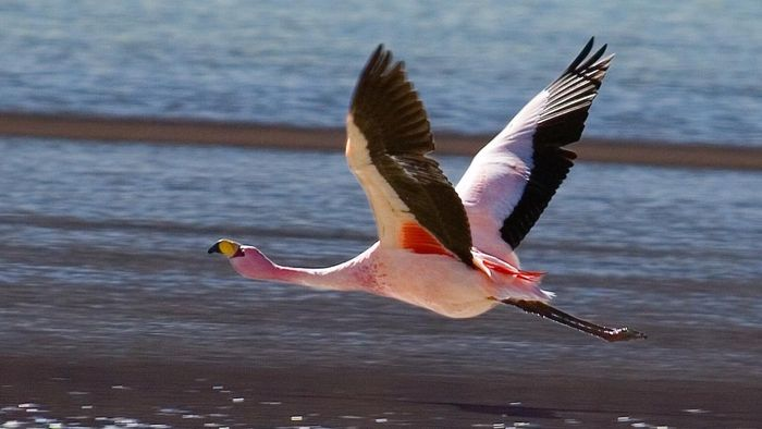 Where Is the Flamingo in the Food Chain?