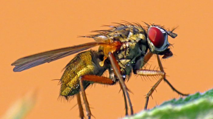 Why Do Flies Bite?