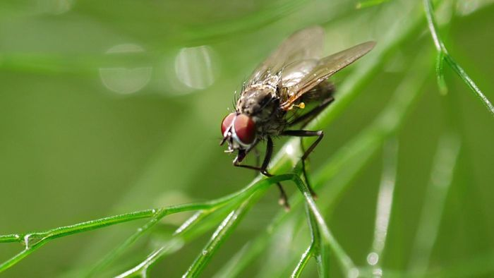 Where do flies go when it rains?