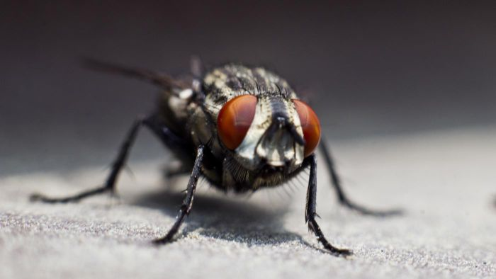 What Do Flies Symbolize?