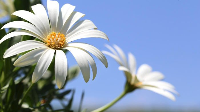 What Flowers Grow Best in Direct Sunlight?