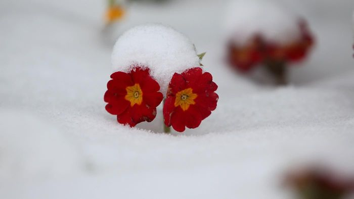 What Flowers Grow During the Winter?