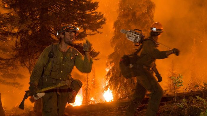 How Do Forest Fires Affect the Environment?