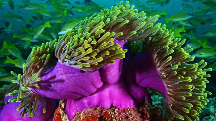 What Forms of Reproduction Does the Sea Anemone Use?