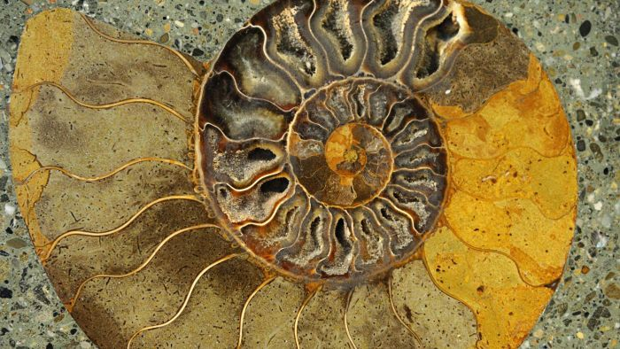 What Is the Fossil Record?
