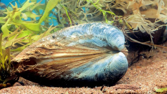 What Do Freshwater Clams Eat?