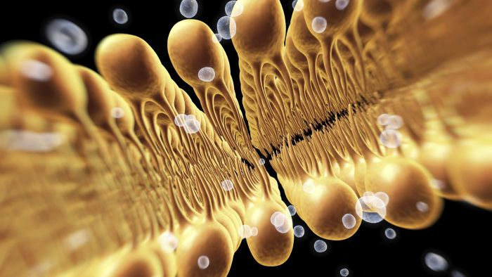 Science and Biology: The Function of a Cell Membrane