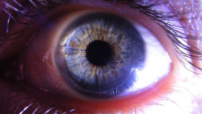 What Is the Function of the Cornea?