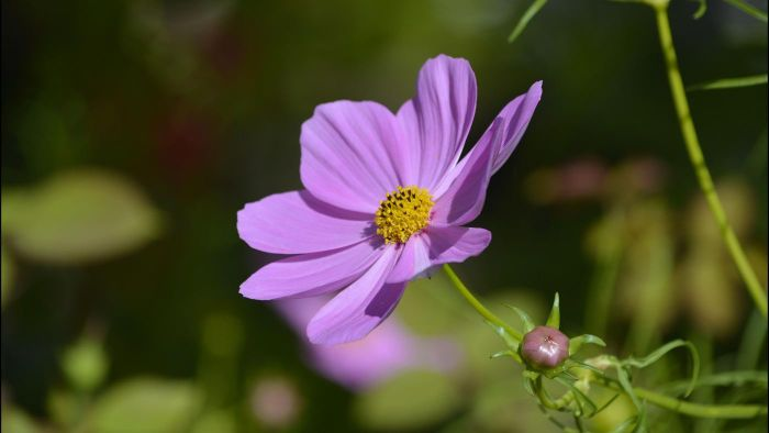 What is the function of a flower petal?