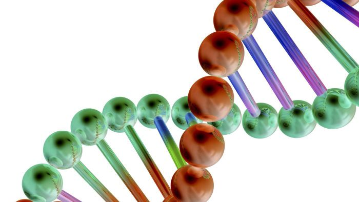 How Are Genes Related to DNA?