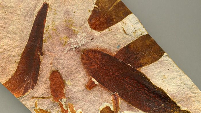Where Are Glossopteris Fossils Found?