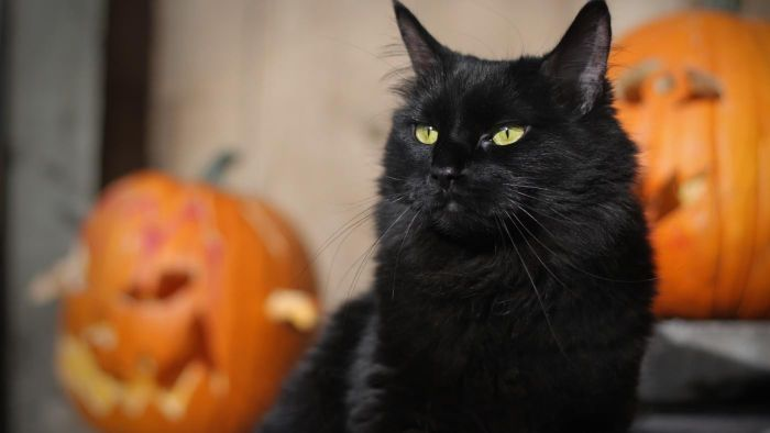What Are Some Good Halloween Cat Names?