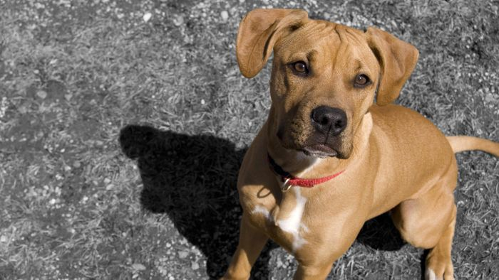 What Are Good Kennels for an American Pit Bull Terrier?