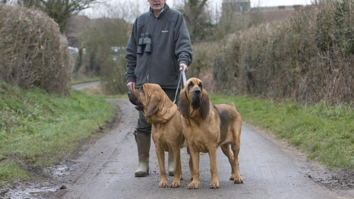 What Are Good Names for a Bloodhound?