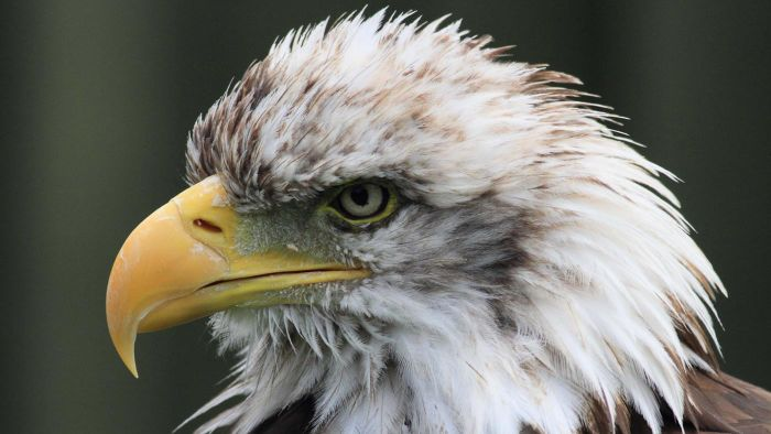 What Are Good Sources for Stock Images of Eagles?