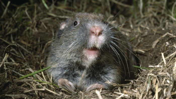 What Are Some Facts About Gophers?