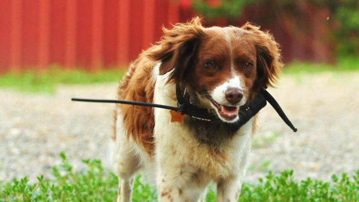 Are There GPS Trackers for Dogs?