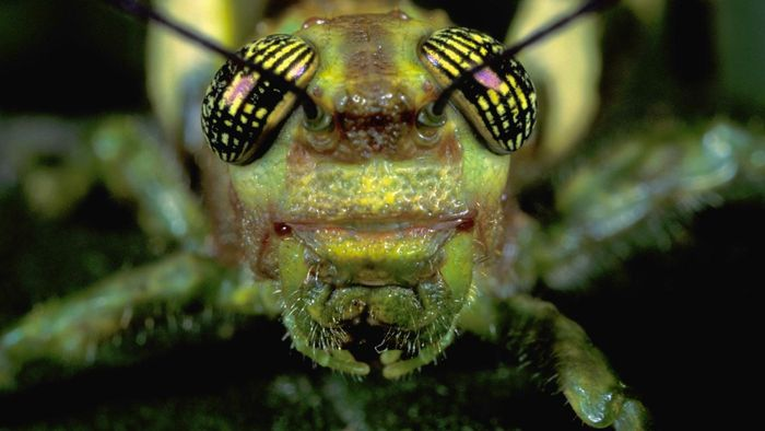 What are grasshopper palps?