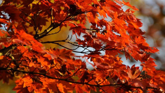 What Is the Growth Rate for a Red Maple Tree?