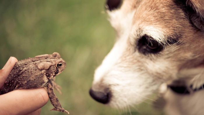 What Happens When a Dog Licks a Toad?
