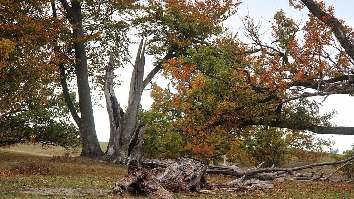 What Happens to a Tree Struck by Lightning?