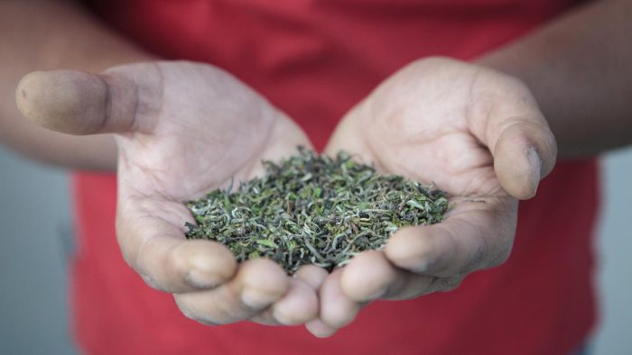What Are the Health Benefits of Darjeeling Tea?
