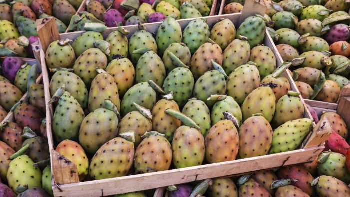 What Are the Health Benefits of Prickly Pears?