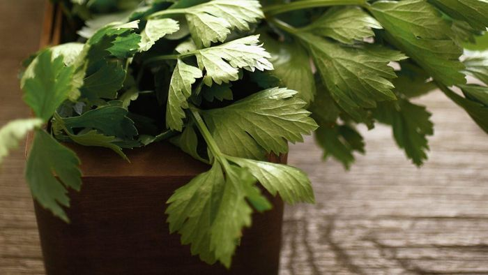 What is the herb lovage used for?