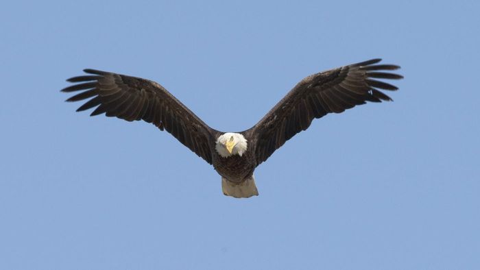 How high can an eagle fly reference how high can an eagle fly altavistaventures Image collections