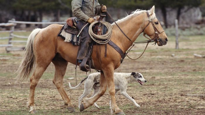Is a Horse Faster Than a Greyhound?