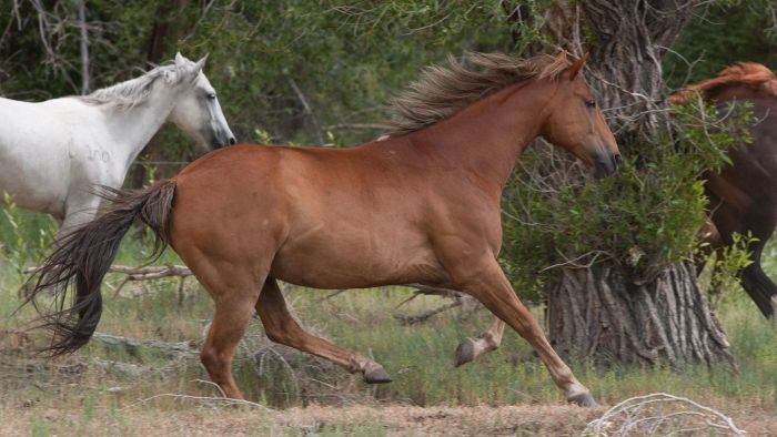 What Is a Horse's Habitat?