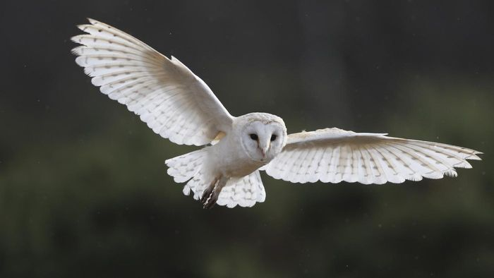 How Do Owls Communicate?