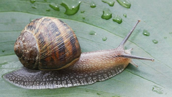 How Do Snails Move?