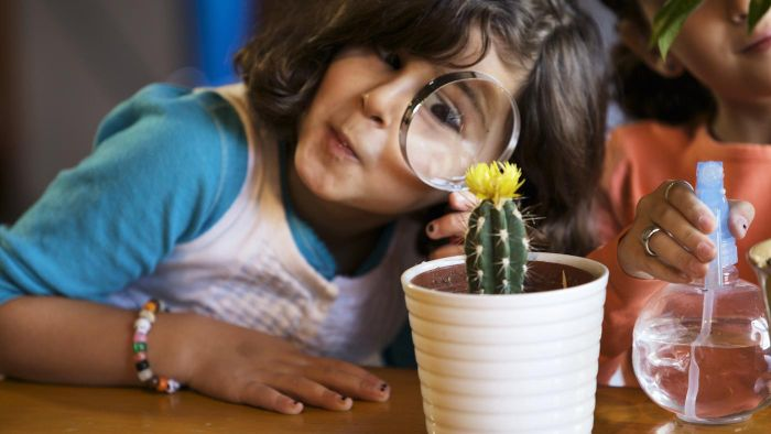 How Does a Cactus Make Its Own Food?