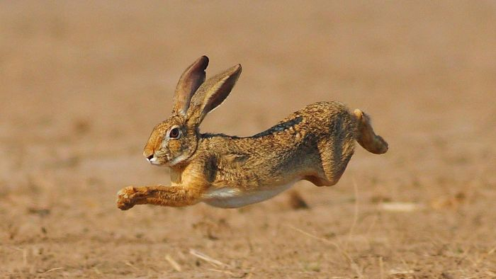 How Do Rabbits Move?