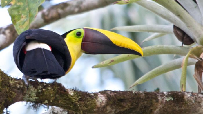 How Long Do Toucans Live?