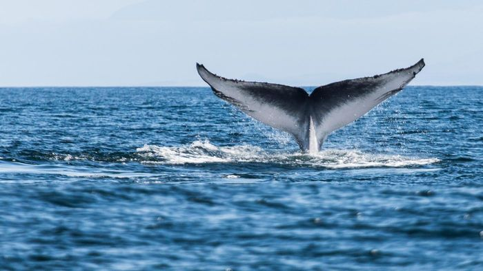 How Long Have Whales Been on Earth?
