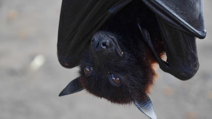 How do you keep bats away?