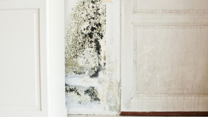 Does Hydrogen Peroxide Kill Mold?