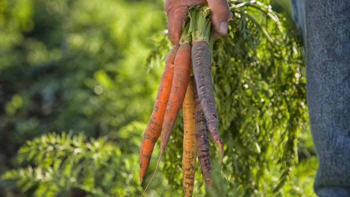 Why Is It Important to Eat Carrots?