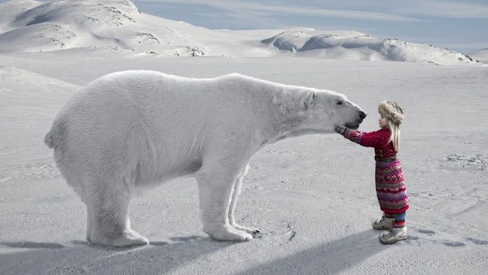 What Are Some Interesting Facts About the Arctic for Kids?