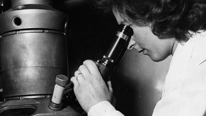 Who Invented the Electron Microscope?