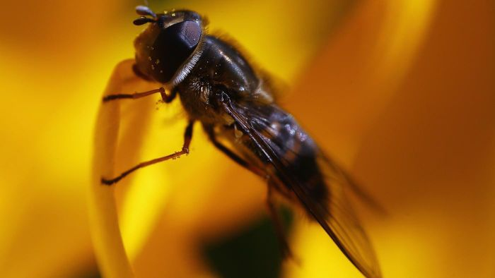 How Do You Keep Flies Away When Outside?