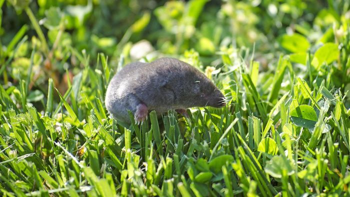 How Do You Keep Moles Out of Your Yard?