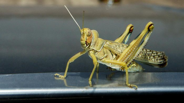 How Do You Kill Grasshoppers?