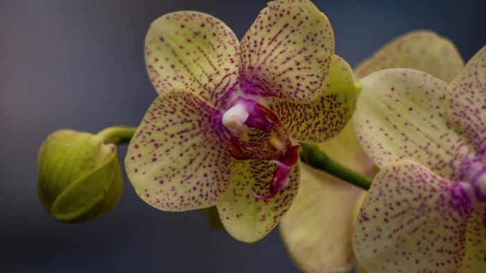 What Kind of Soil Should You Use to Plant an Orchid?